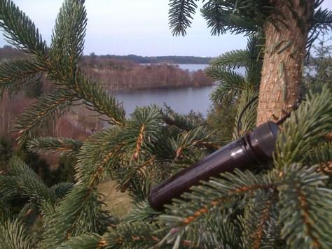 jeszcze jeden kesz na drzewie