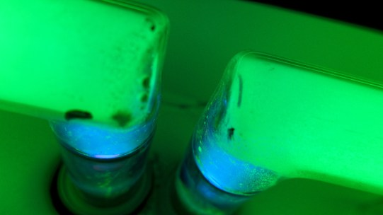 neon03