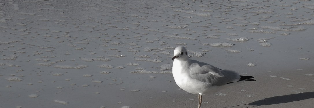 birds03
