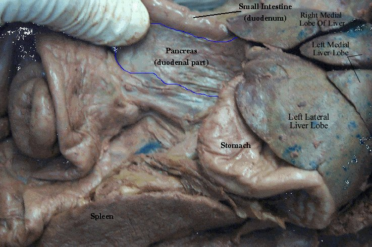Labeled System Digestive