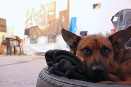 Taco - studio watchdog
