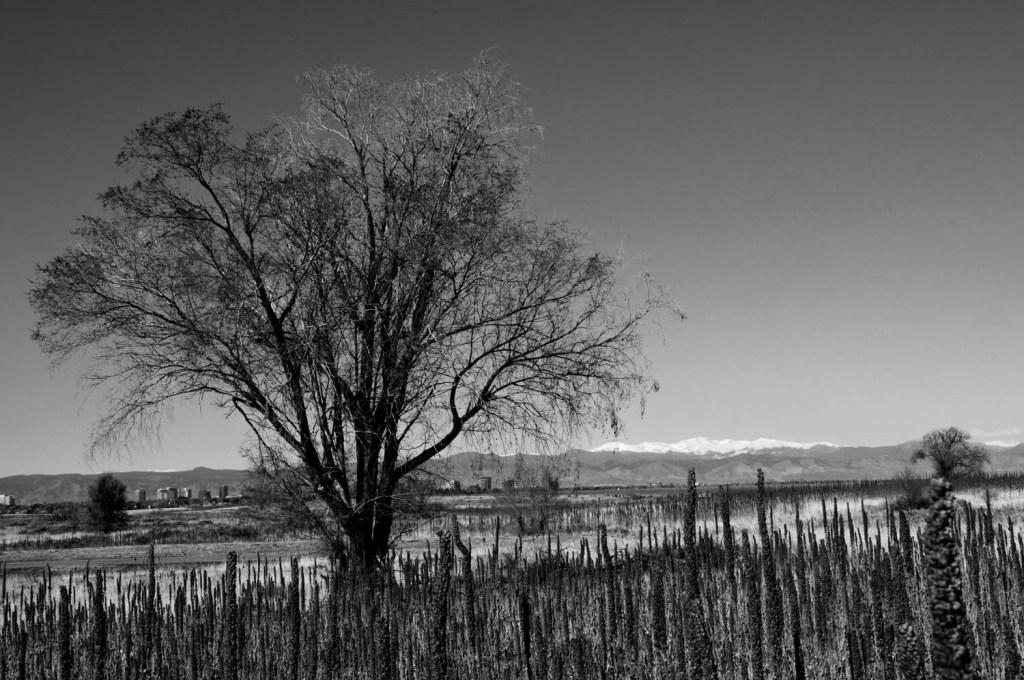 Tree Against the Horizon
