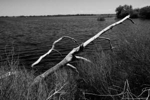 The Log and the Lake