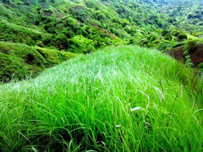 Green Grass of Mt. Batulao