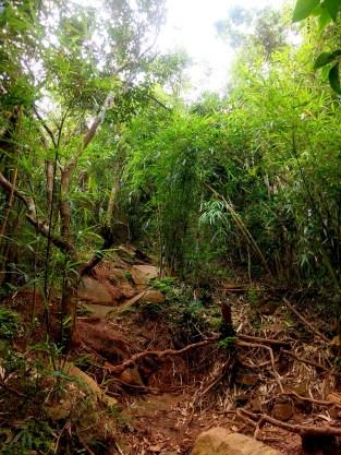 Bamboos and Tall Trees Pico De loro