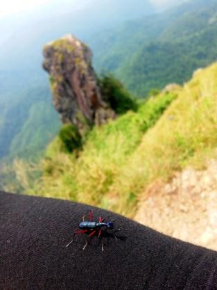 Bugs Life at Mt. Pico De Loro