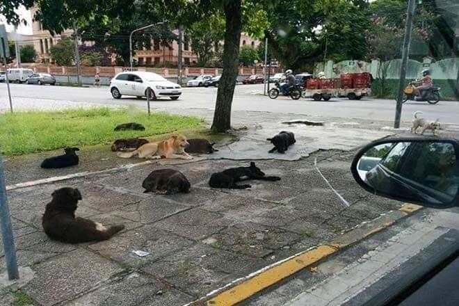 ONG quer construção de centro de tratamento de animais de rua 1