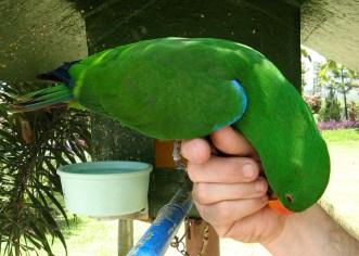 Carnivorous Parrot111