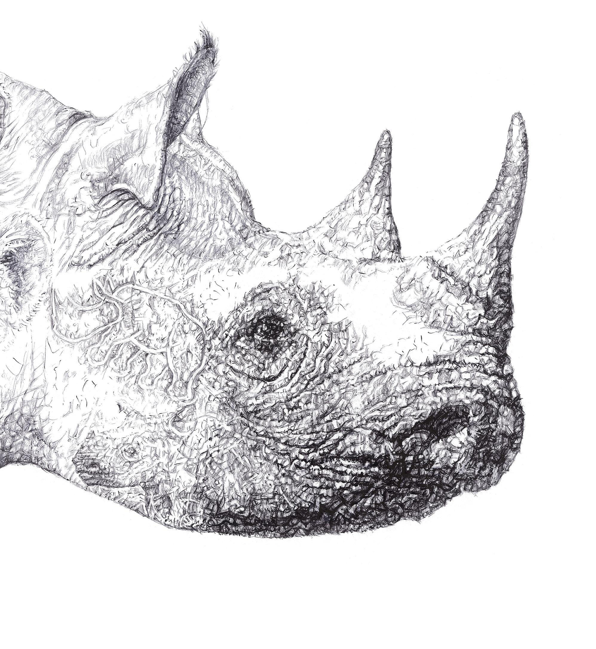 Rhinoceros Head Drawing
