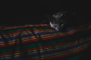 A cat on a blanket.