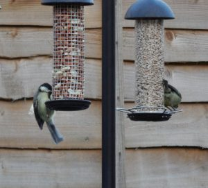 Blue tit and a great tit on bird feeding station