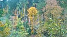 schwarzwald-11