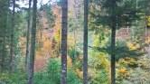 schwarzwald-13