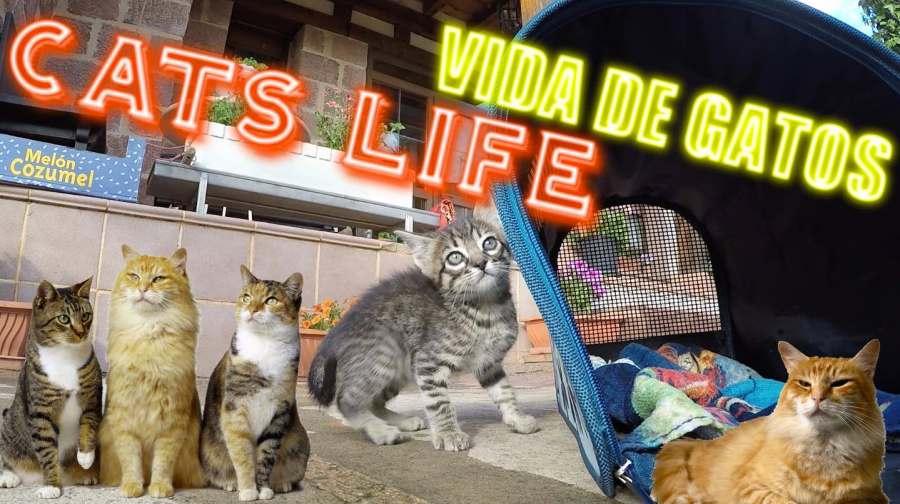 Cats life