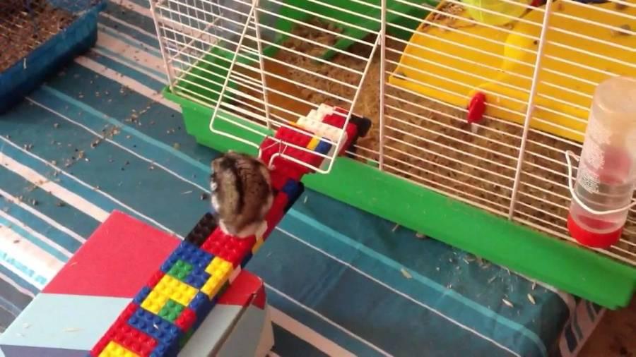 14-11-2020 tweet hamster