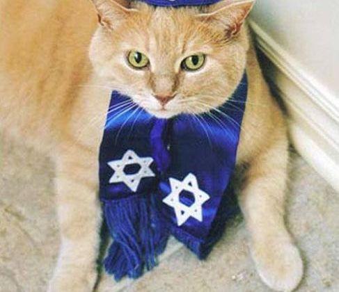 JCC Newsletter – Shabbat Chol haMoed Sukkot