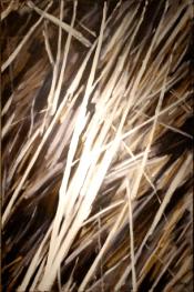 2004 - Huile / Rythme 004