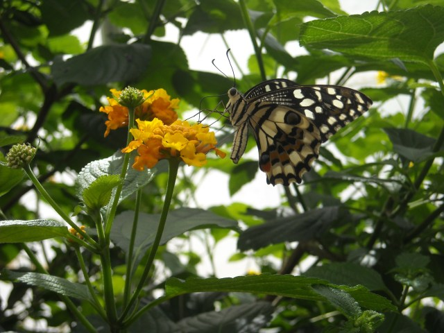 A butterfly sits on a yellow flower.