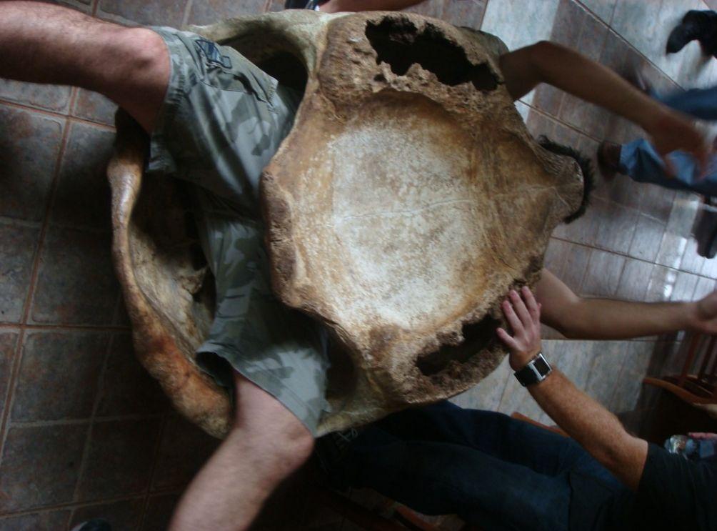 Incluso podréis probaros un traje-tortuga durante esta estancia