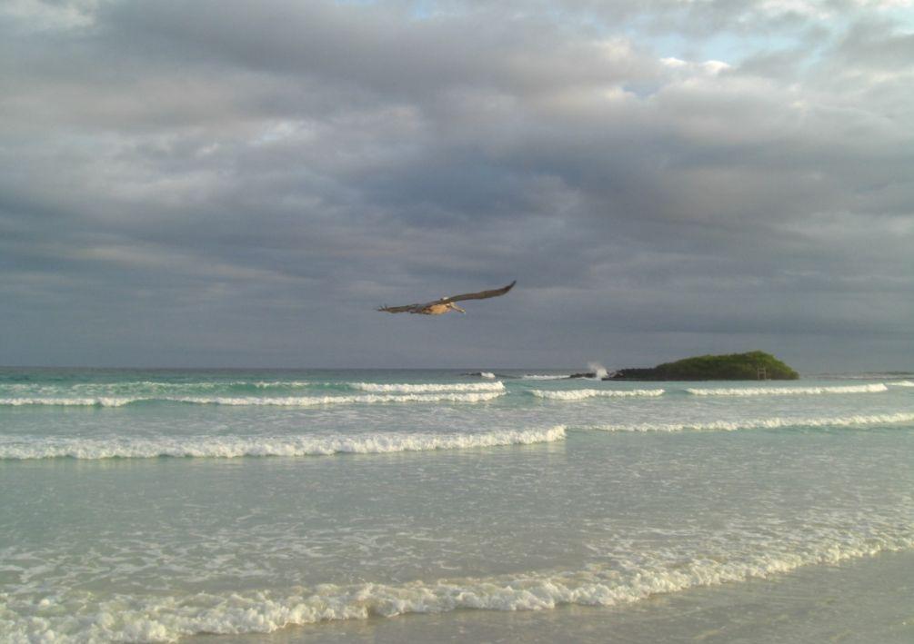 Tortuga Bay es una playa que puede competir con las mejores del mundo, a solo una hora a pie de Puerto Ayora