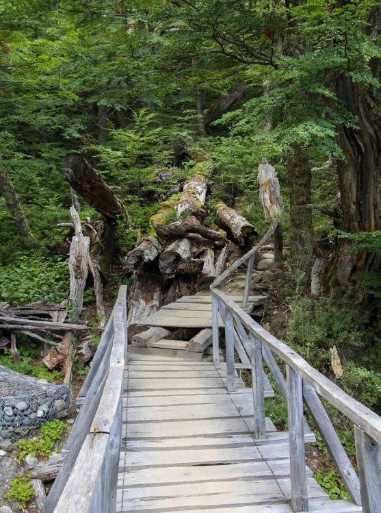 Bosque de Lenga - Sector Los Perros - Torres del Paine
