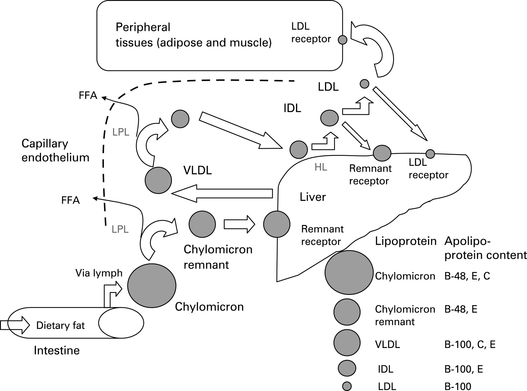 Investigation And Management Of Hypertriglyceridaemia