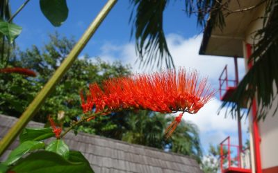 Paramaribo – the turning point