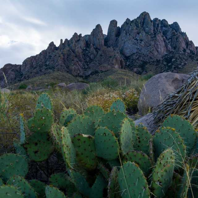 Laz Cruces, Organ Mountain National Park