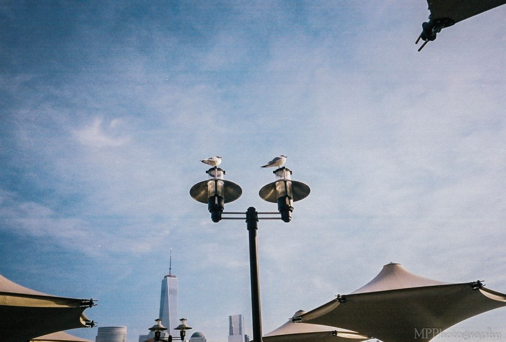 When a Camera Takes you Places: Contax T2 (5/6)