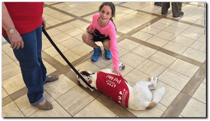 animals in airports