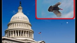 turkey flying over capitol dome