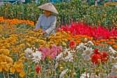 picking-flowers