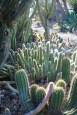 Cactus Corridor at the Ruth Bancroft Garden