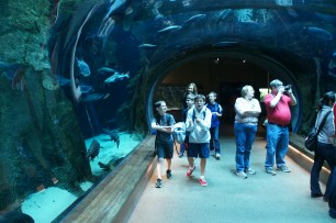 inside the aquarium tube