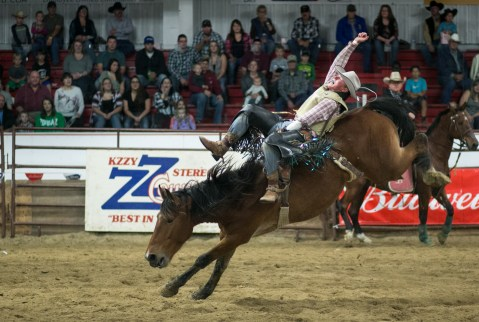 Clay Jorgenson of Watford City, ND hangs on during the bareback event during the Devils Lake NDRA Shootout at the Burdick Arena in Devils Lake, ND on Saturday, September 24, 2016. (Joshua Komer/Grand Forks Herald)