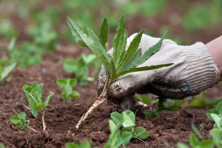 Winning Over Weeds