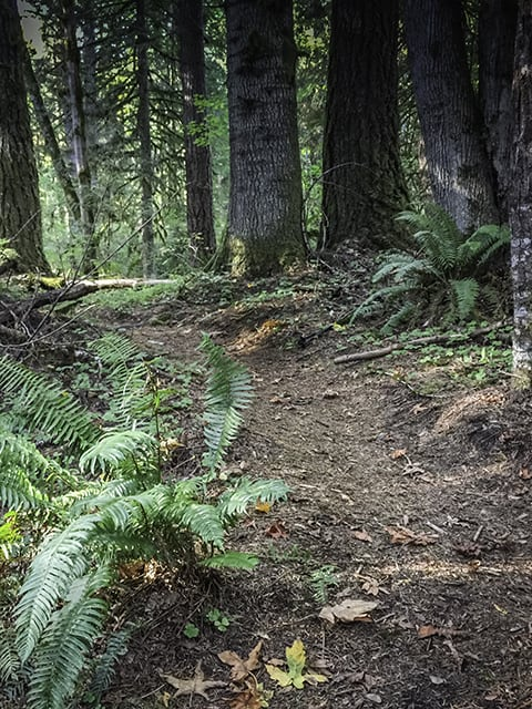Hiking Barlow Wayside Park in Mt. Hood National Forest