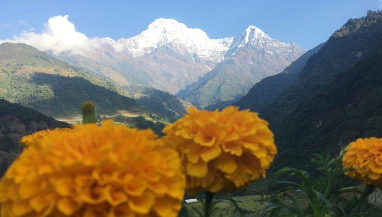 Annapurna flor