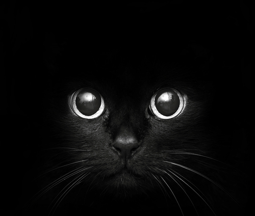 shadow kitteah
