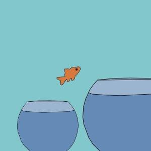 les techniques pour relever un défi : poisson sautant d'un petit bocal à un autre