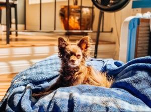 Keiki on her Dodger bed.