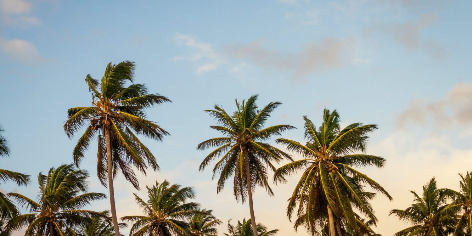 The top of palm trees (no trunk) with a blue sky fading into yellow.