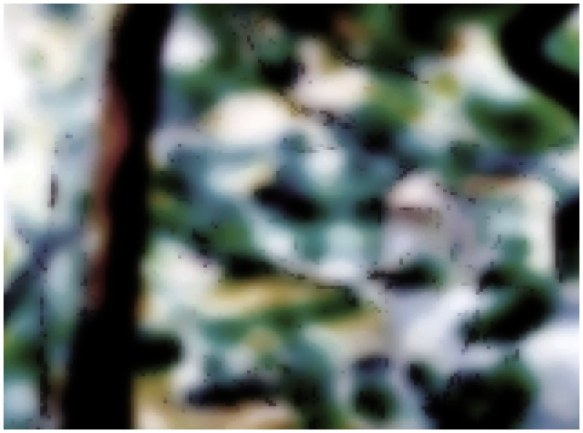 Saturation (arbre tordu 05), 2010