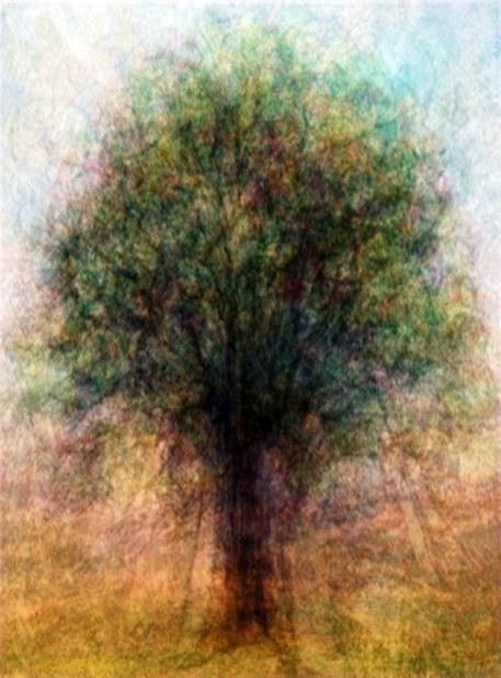 Saturation domestique (arbre), 2011