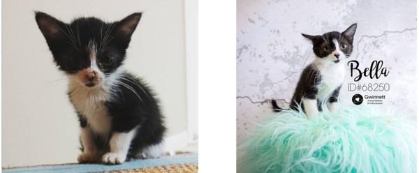 Who Doesn't Love A Kitten? by Jean Brashear