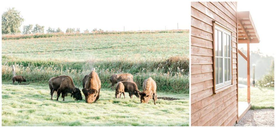 Ditlevsdal bison farm corona bryllup fotograferet af bryllupsfotograf jeanette merstrand