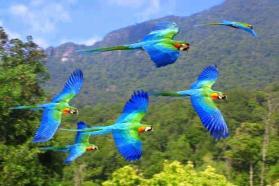 blue_flying_birds
