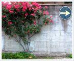 red bush against wall plus arrow