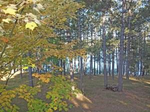 Beautiful fall setting on 4.64 acres