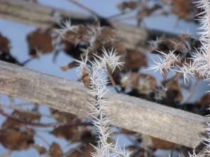 Shards of frost on a dried up clematis vine